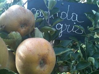 Pommes, poires… le samedi matin